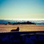 chien sur la plage à Frontignan plage
