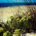 Plantes à Frontignan Plage