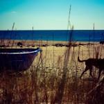 Photo d'un bateau et d'un chien sur la plage
