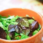 mélange de feuilles de basilic pourpre et basilic petit marseillais